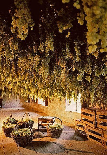 Circuito de viñedos